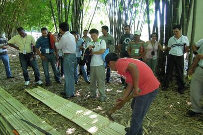 Taiwanicdf avanza tecnificaci n de cultivos de bamb - Cultivo del bambu ...