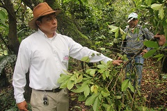 TaiwanICDF and CABEI Assist Central American Countries to Combat Coffee Rust Disease