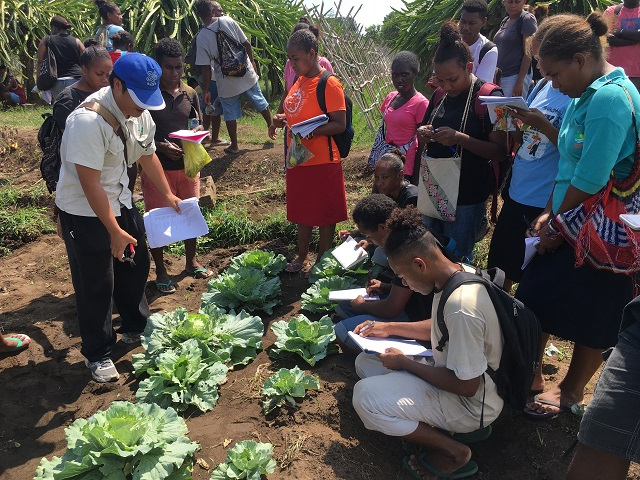 Boosting health of children in South Pacific Islands through school farming