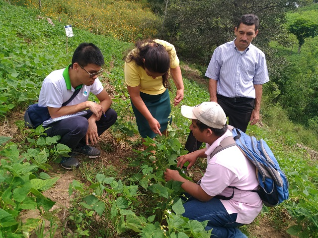 A new choice for healthy diets – TaiwanICDF helps Nicaragua to breed new variety of common bean