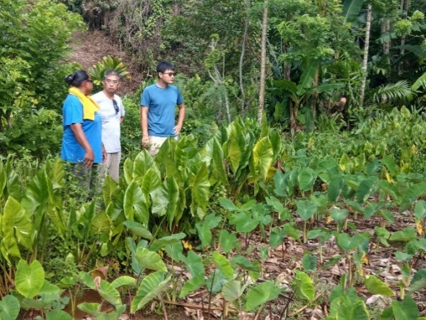 Taiwan Technical Mission in Palau assisted Palau's women's organizations in successfully applying for grants from the Global Environment Facility (GEF) Small Grants Programme to replant taro in their hamlets for sustainable livelihoods.
