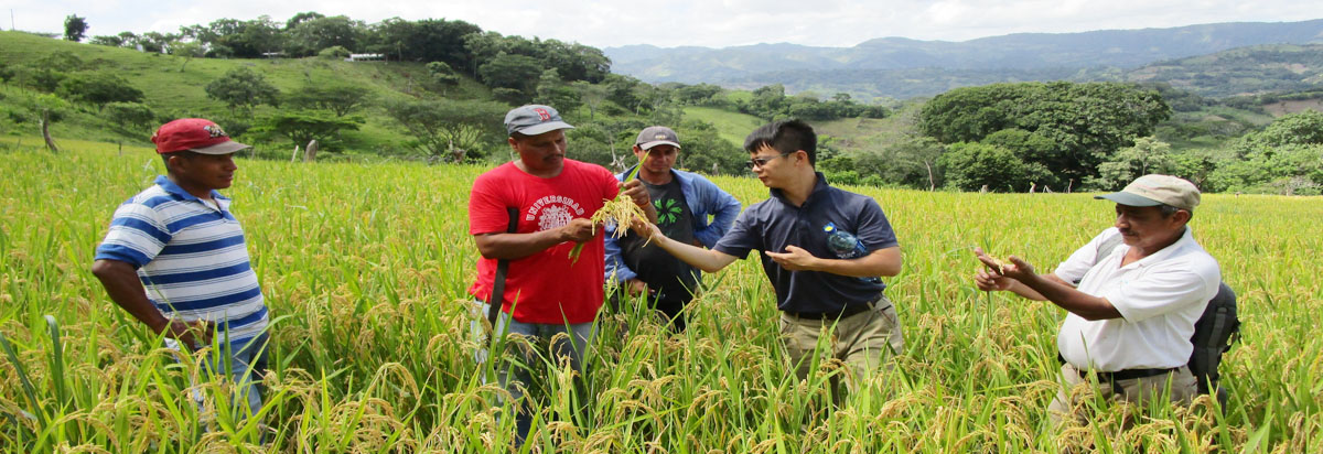 Rice Seed Research, Development and Production Extension Project in Nicaragua