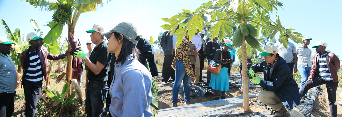 Fruit Tree Production and Marketing Project in Eswatini