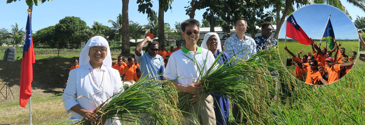 Strengthening rice production techniques in the Solomon Islands through Food Crop Improvement Project