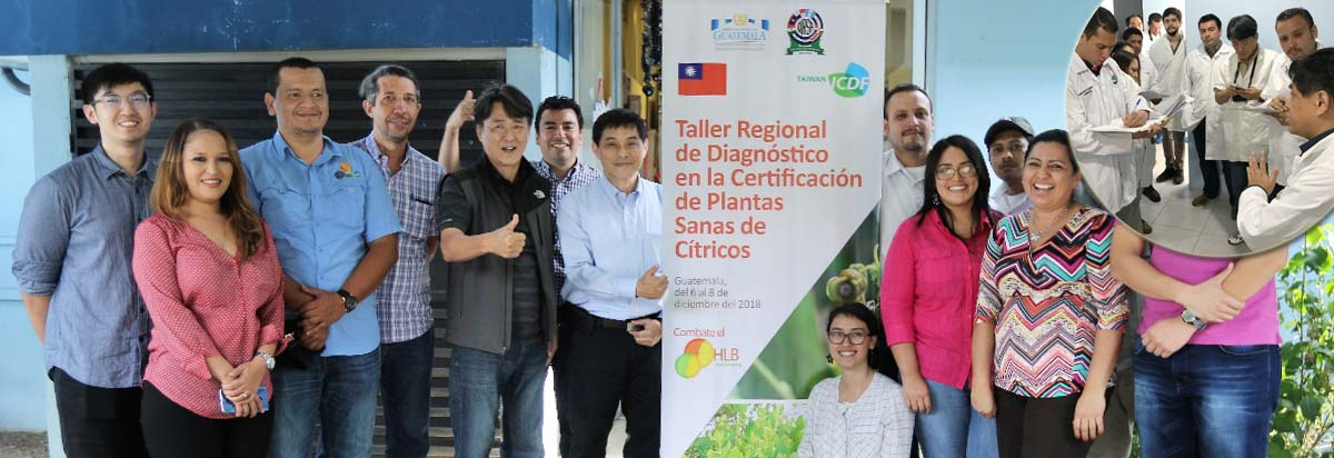 OIRSA and TaiwanICDF continue collaboration on citrus disease in Central America